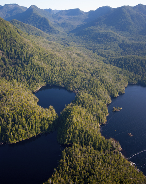 TNC is working in partnership with local Indigenous communities to conserve over a quarter-million acres of old-growth forest along British Columbia's southern coast in Clayoquot Sound. Photo by Bryan Evans.