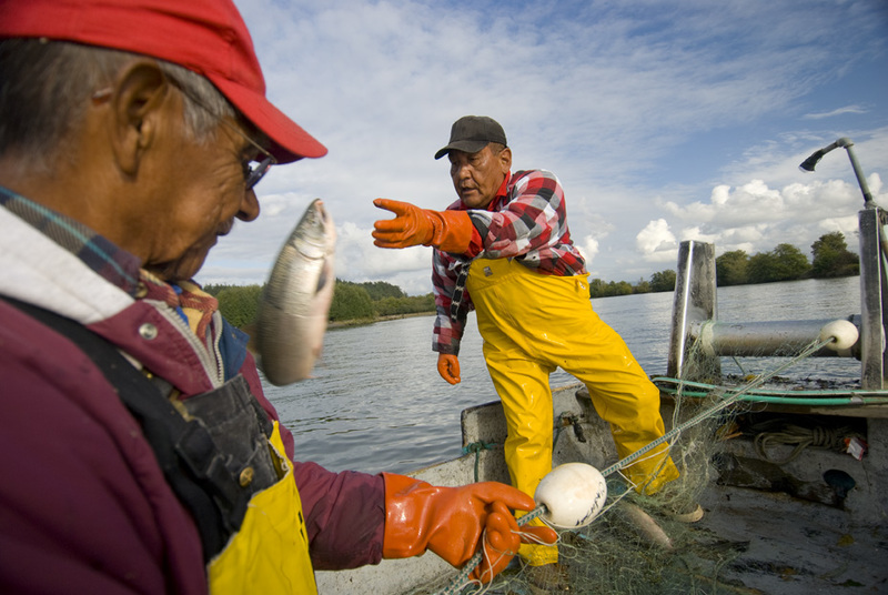 For some restaurants in Seattle, sustainable practices include purchasing from tribal fisheries to support culture and subsistence living. This image depicts members of the Swinomish Tribe, who use drift net fishing techniques on the Skagit River. Photo by Bridget Besaw.