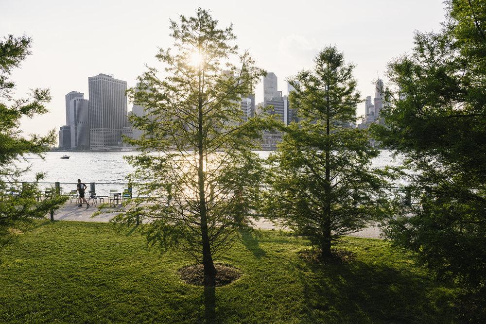 Trees in Brooklyn Bridge Park. Photo © Kevin Arnold