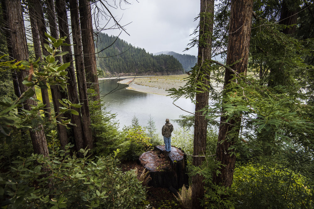 Fishing guide and Yurok tribal member, Pergish Carlson, stands atop a tree trunk and looks at the forests around the Klamath River in northern California. Photo ©Kevin Arnold