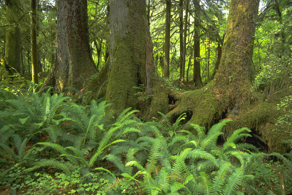 Nurse log in Washington state. © The Nature Conservancy