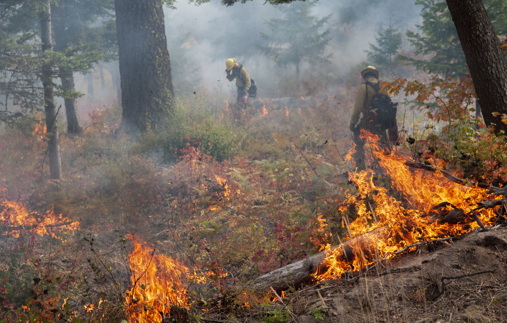 TREX is a training opportunity to increase expertise in prescribed fire and conduct successful burns to restore forest health and reduce wildfire risk. © Nikolaj Lasbo / TNC