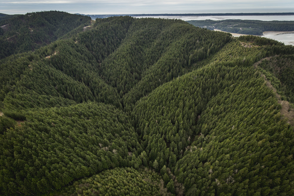 Ellsworth Creek Preserve protects an entire watershed adjacent to the Willapa National Wildlife Refuge. Photo (c) Chris Crisman with aerial support from LightHawk.