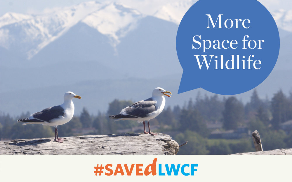 "LWCF protects wildlife habitat across the country, including Dungeness Spit National Wildlife Refuge. See what else LWCF means ""more"" of below. Photo by Kimon Belin/Creative Commons."