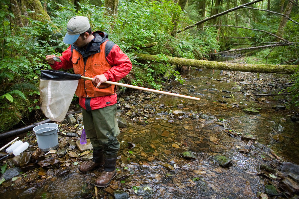 Brandon Nickerson of Port Orchard, WA, collects bugs from the waters of a stream ton one of our preserves. Photo by Harley Soltes.
