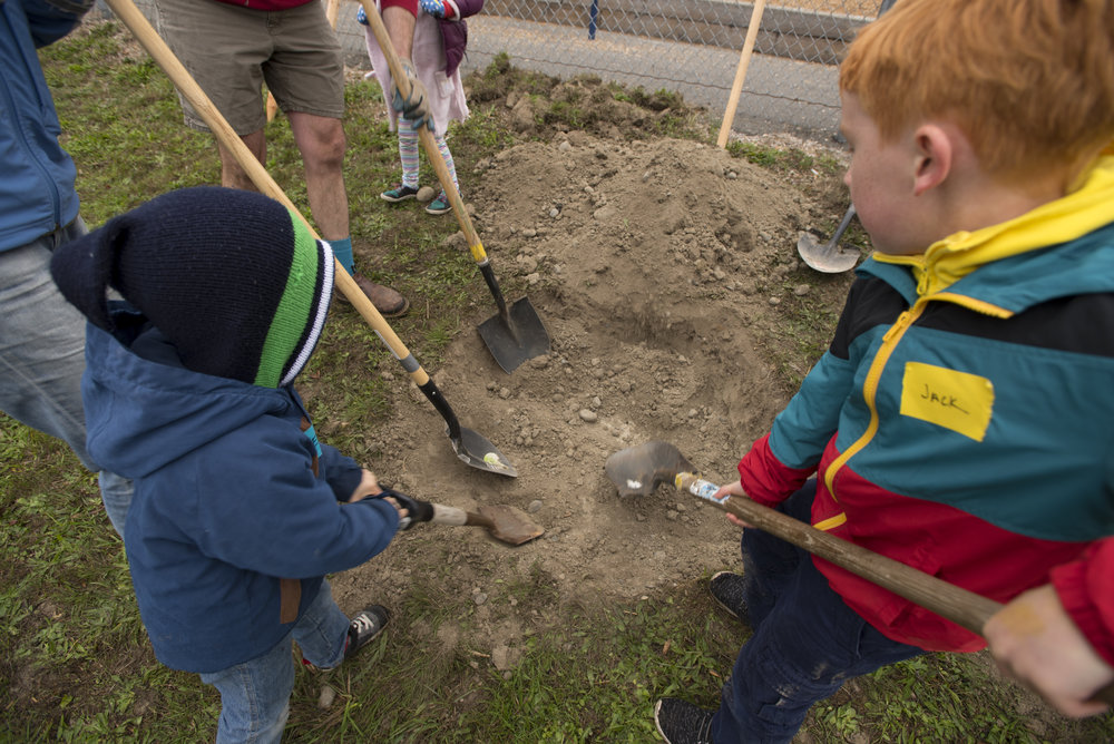 Kids work to dig a whole to plant a tree at Hawthorne Elementary in October, 2018. © Hannah Letinich