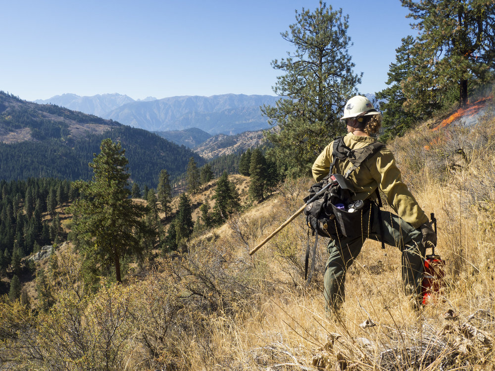 Controlled, low-intensity prescribed burns are an essential part of restoring our forests to health and actually help prevent catastrophic wildfire. Photo by Kara Karboski.