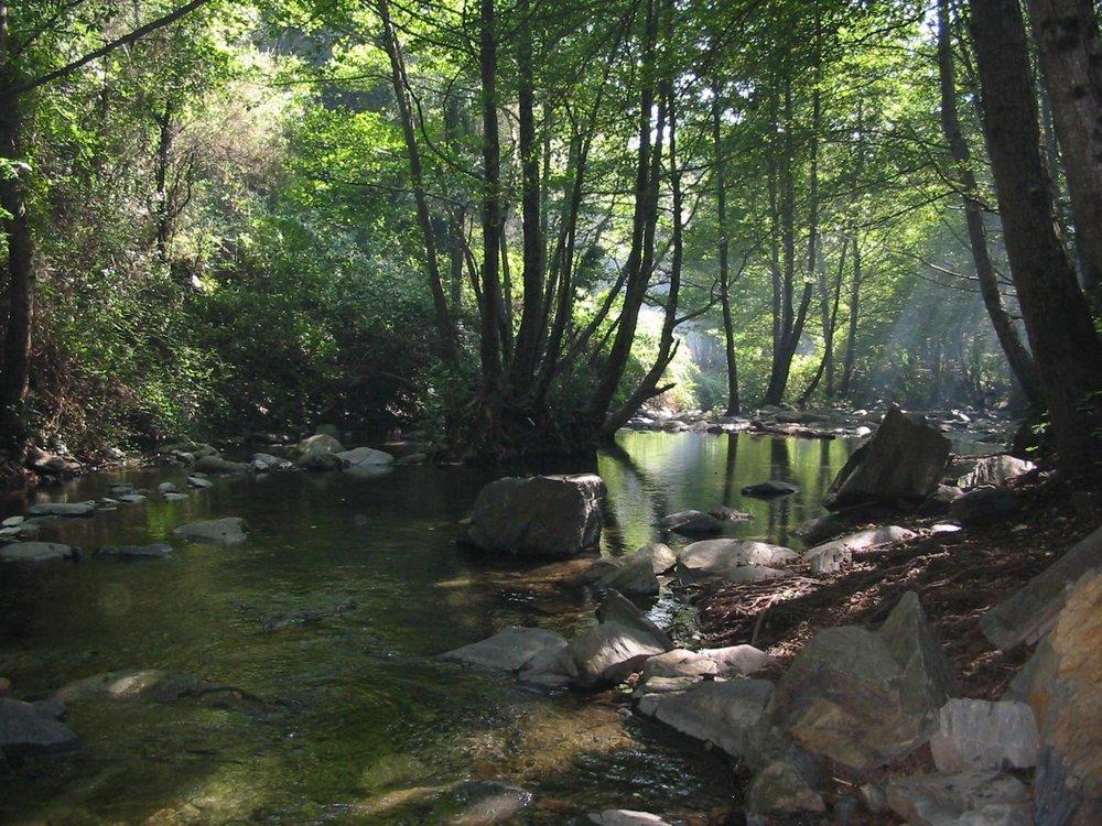 WIKI-Xavigivax- Montseny.jpg