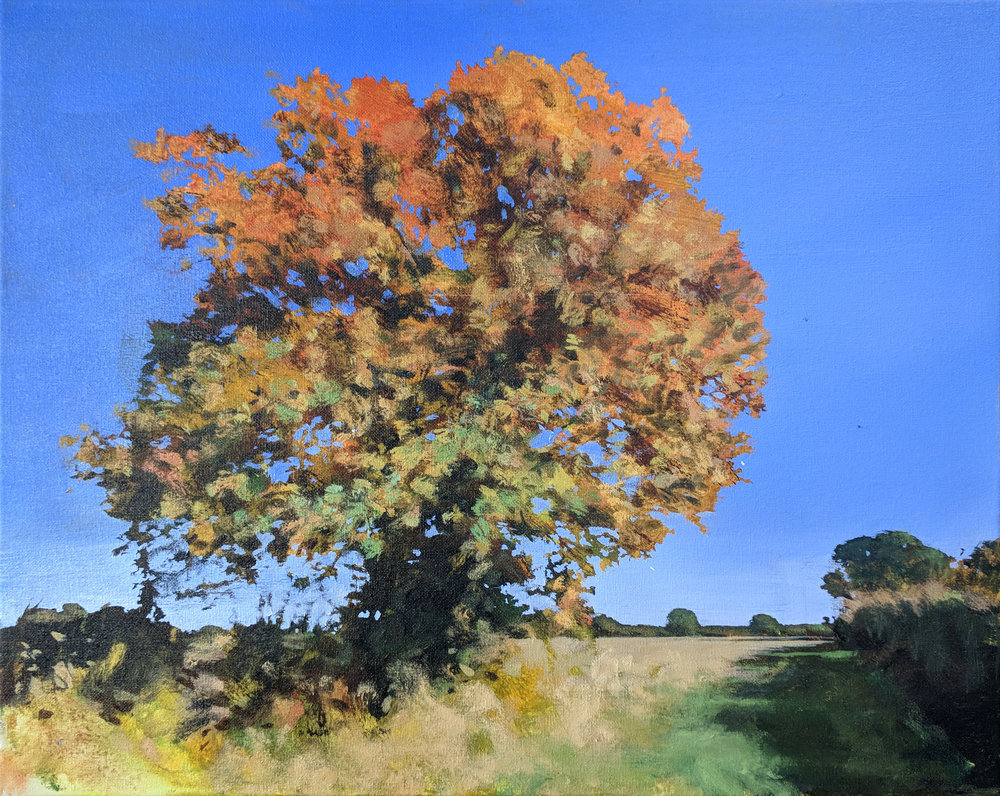 Oak on Snake Lane