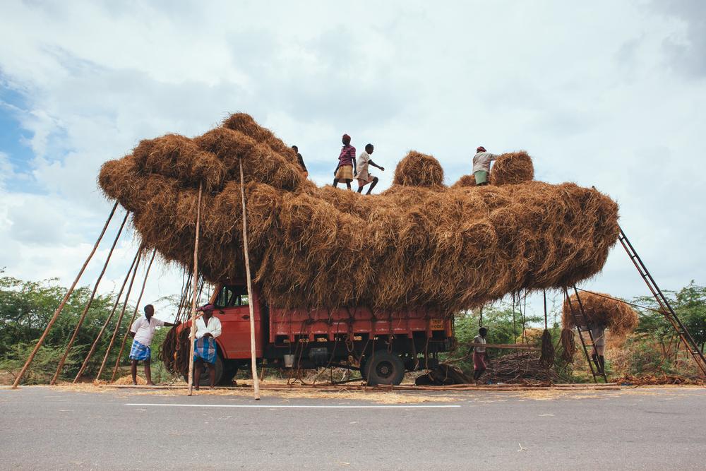 Southern-India-32.jpg