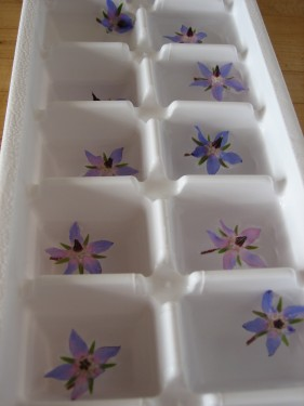 Blue Borage Flower Ice Cubes