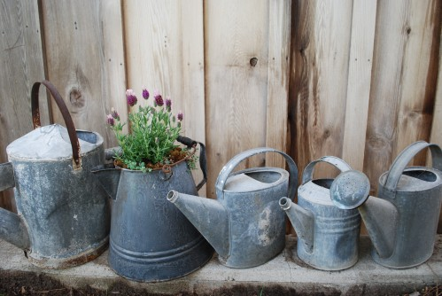 Vintage Watering Cans Make A Statement