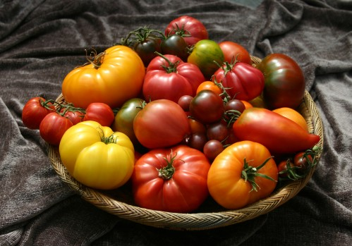 Tomato Beauties, Courtesy of TomatoFest