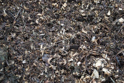 The Many Surprising Benefits of Compost