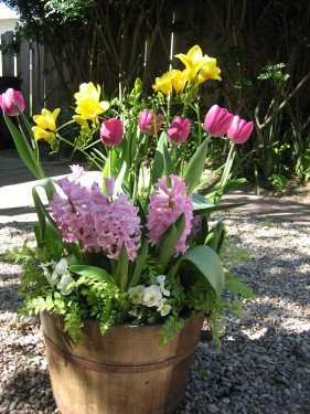 Bucket of Spring Bulbs