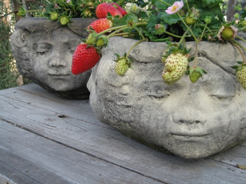Crown of Strawberries