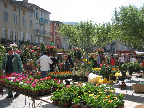 Market Day Flowers in Provence