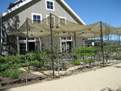Espaliered Fruit Trees Perimeter Outdoor Dining Area