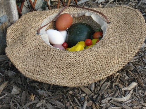 Eggs, Squash, Cherry Tomatoes Inside My Garden Hat