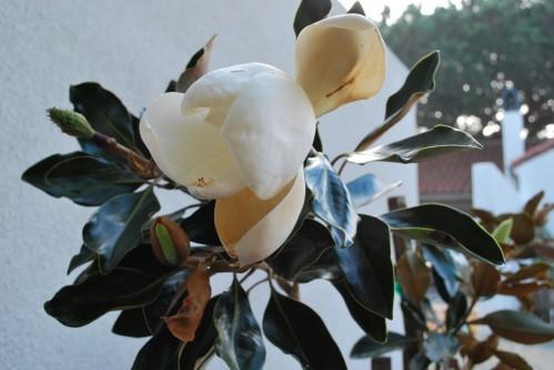 Magnolia Blossom Inspires
