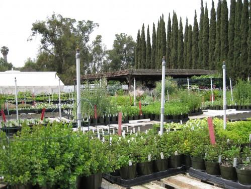 Pearson's Gardens