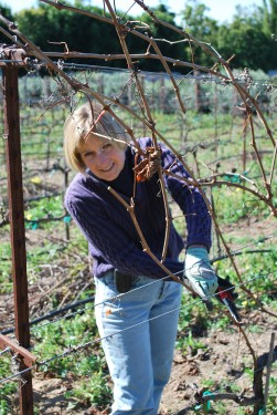 VintageGardenGal Pruning The Vineyard