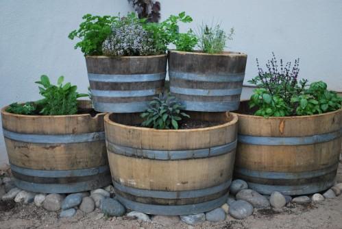 Herb Garden a la Wine Barrels