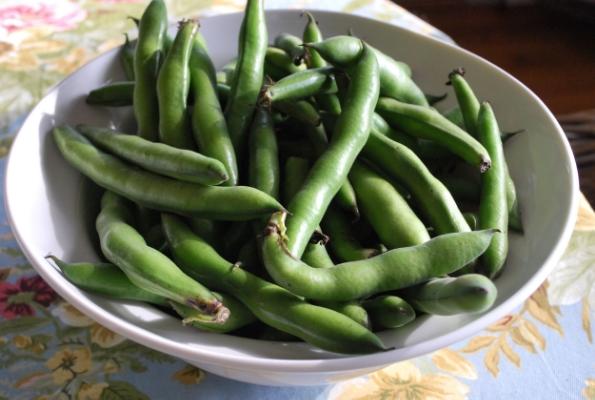 Spring Fava Beans