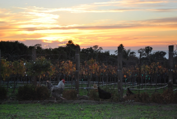 Sunset over Domaine de Manion