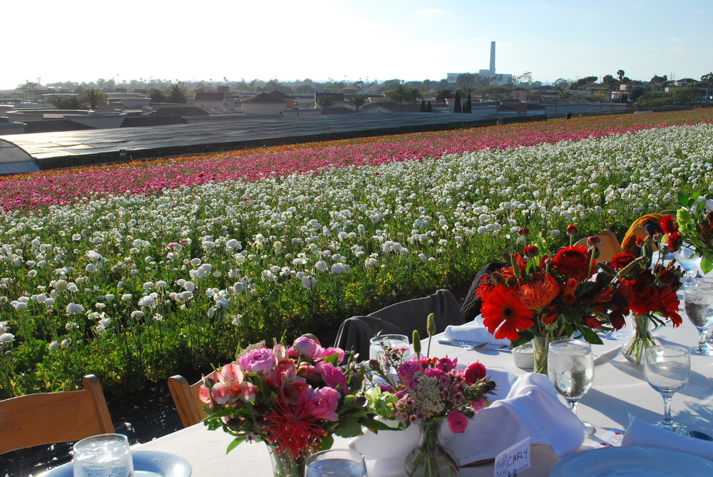 Field to Vase Dinner Tour--Carlsbad Flower Fields