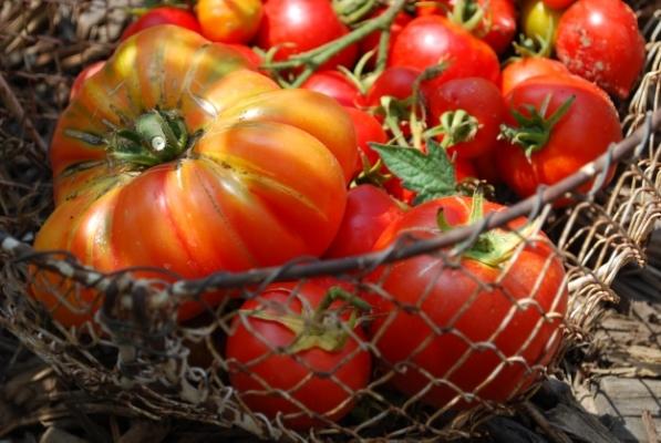 Sun-Ripened Heirloom Tomatoes