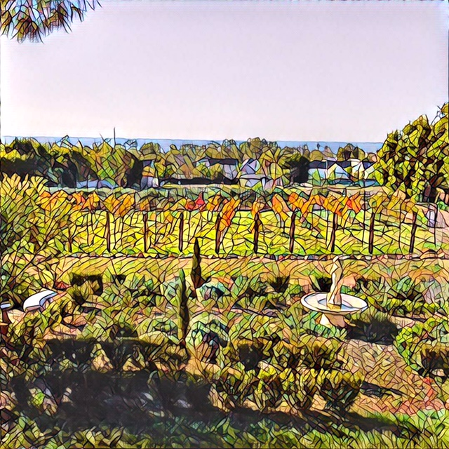 Our December Garden and Vineyard     Photo by friend, Charlie Clements