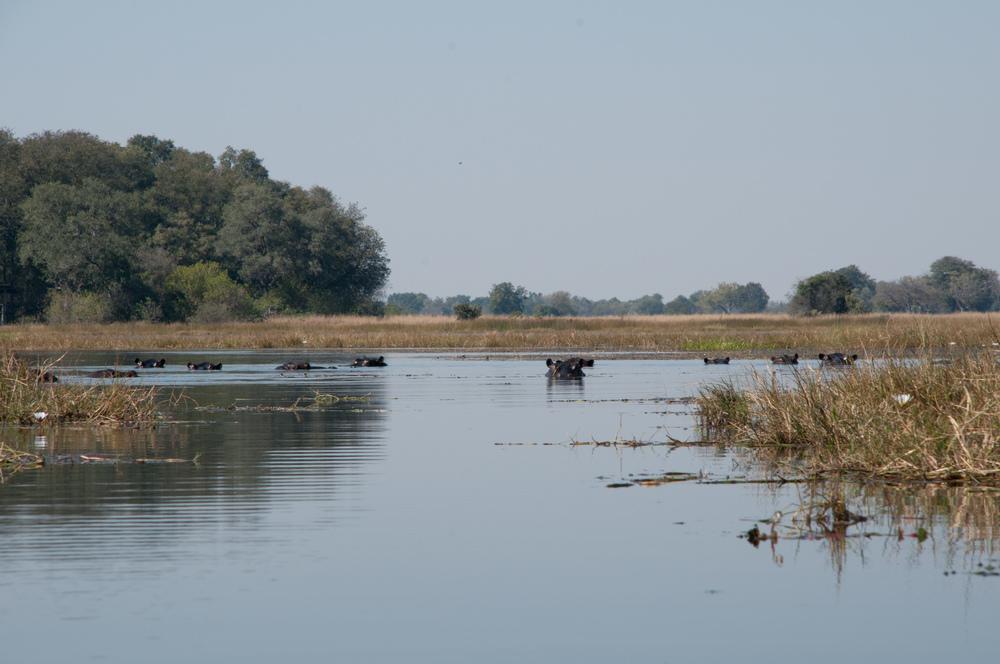 Okavango Delta-4640.jpg