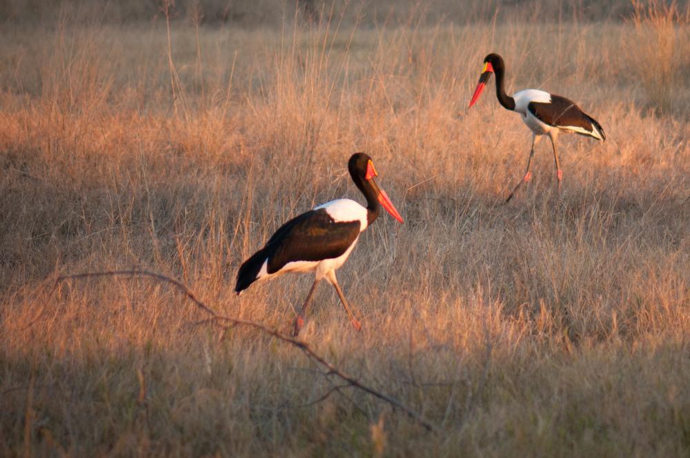 Okavango Delta-4437.jpg