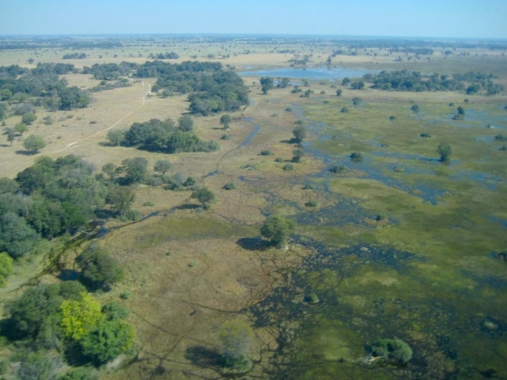Okavango Delta-2190.jpg
