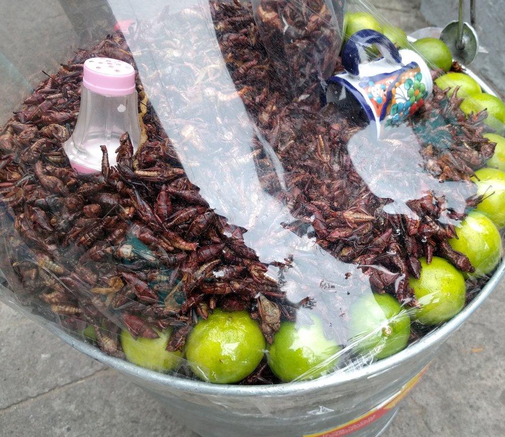 Chapulines (Crickets), Zapopan, Mexico