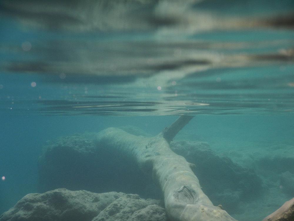 underwater w log.jpg
