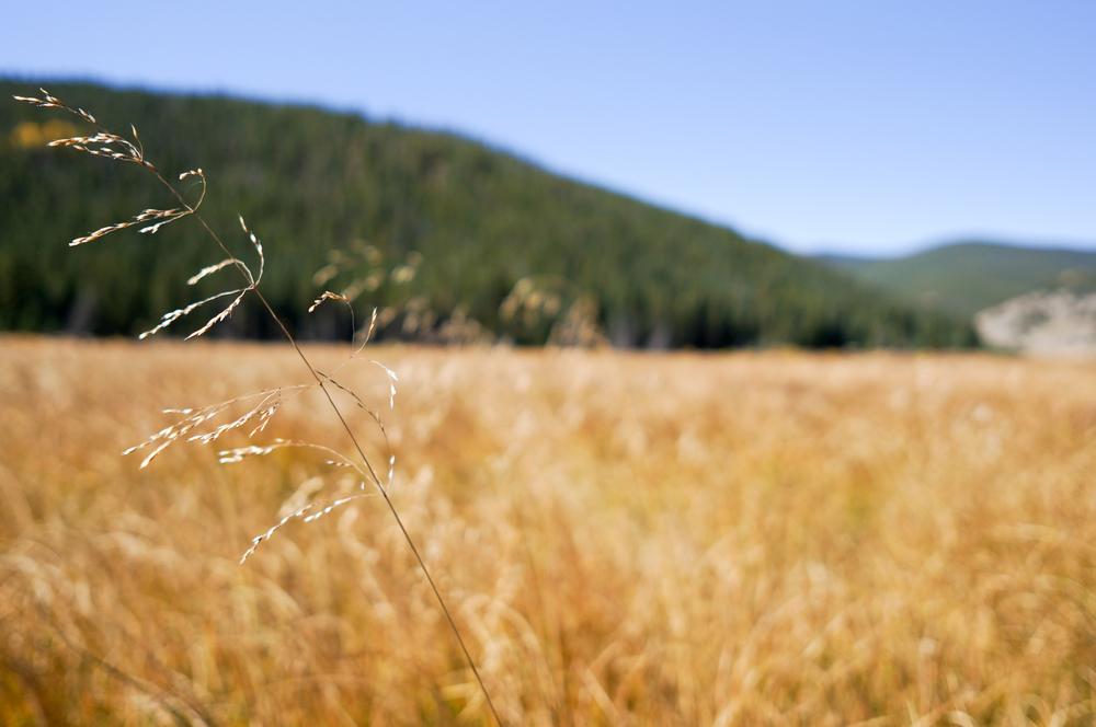 The meadow along Geneva Creek