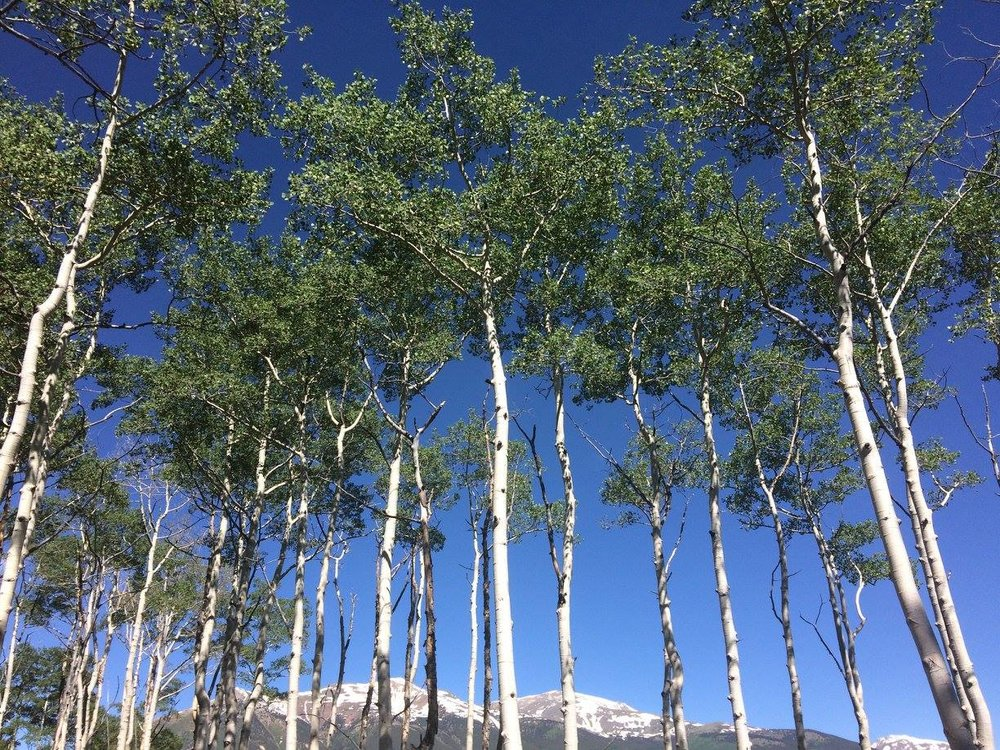 I love the sound of the quaking aspens.