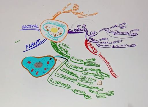 Darius Mind map studio Cell structure.JPG