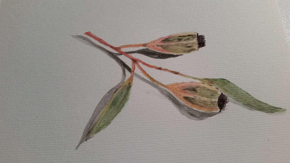 a little more tonal work and some detail on the seed pods