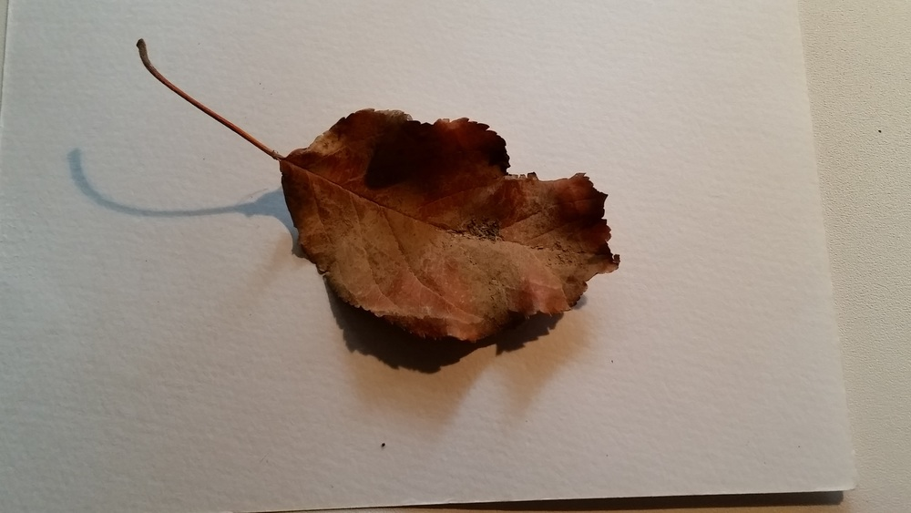 Even a brown and crinkly leaf has character and is worthy of an artwork!