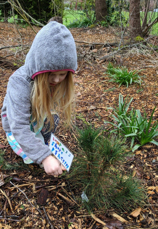 Laura Shore Pine 4-11-18.jpg