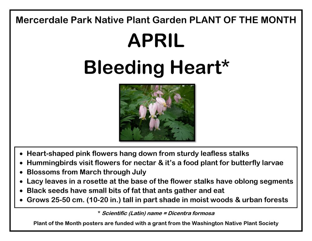 p PLANT OF THE MONTH 4 April Bleeding Heart v1-page-001(1).jpg