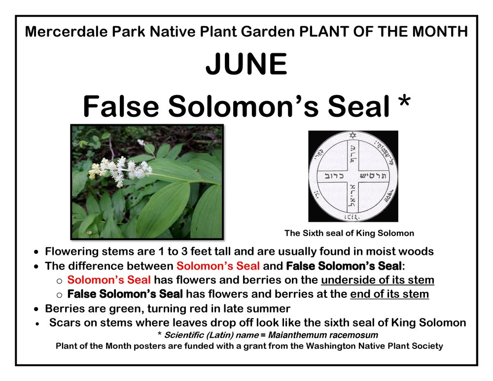 p PLANT OF THE MONTH 6 June False S Seal FINAL-page-001.jpg
