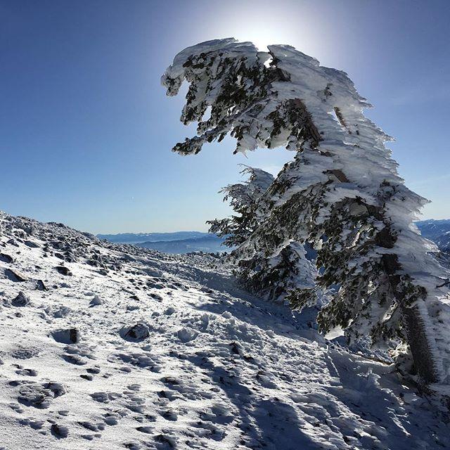 Rossignol:  Another Best Day #snowbasinresort