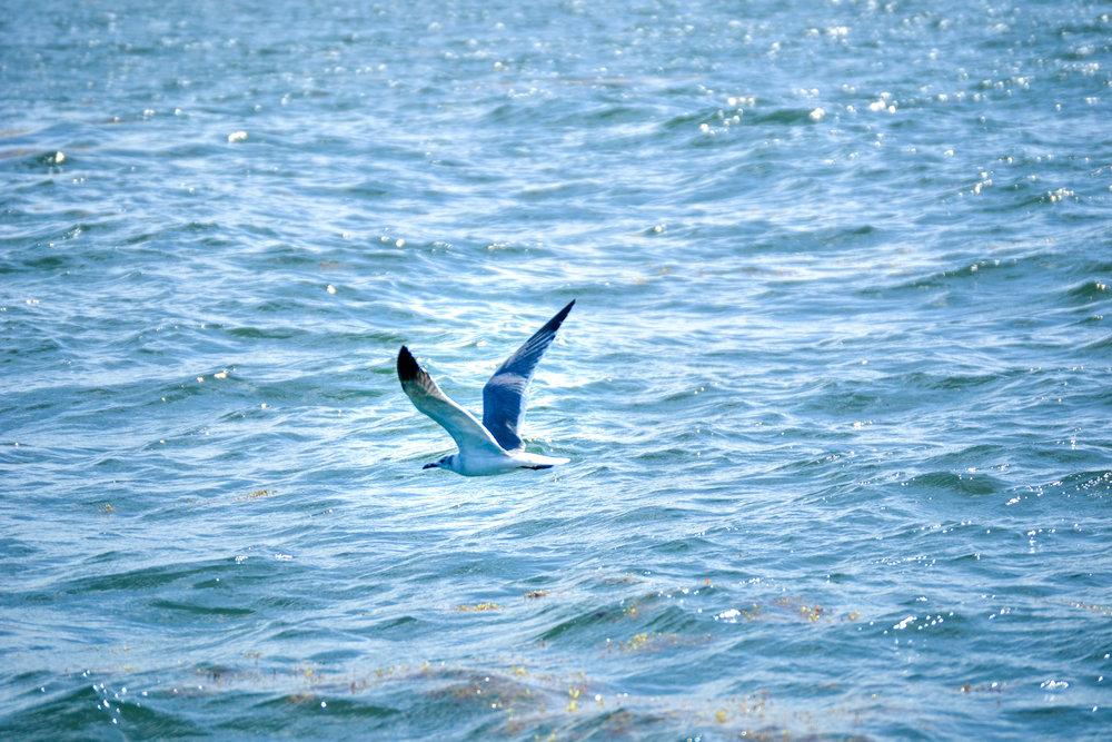 olapi-creative-blue-discovery-tour-seagull