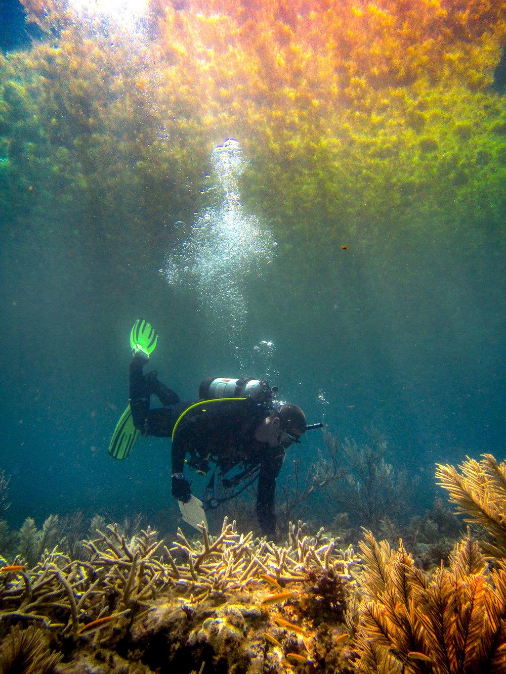 olapi-creative-blue-business-spotlight-nsu-corals