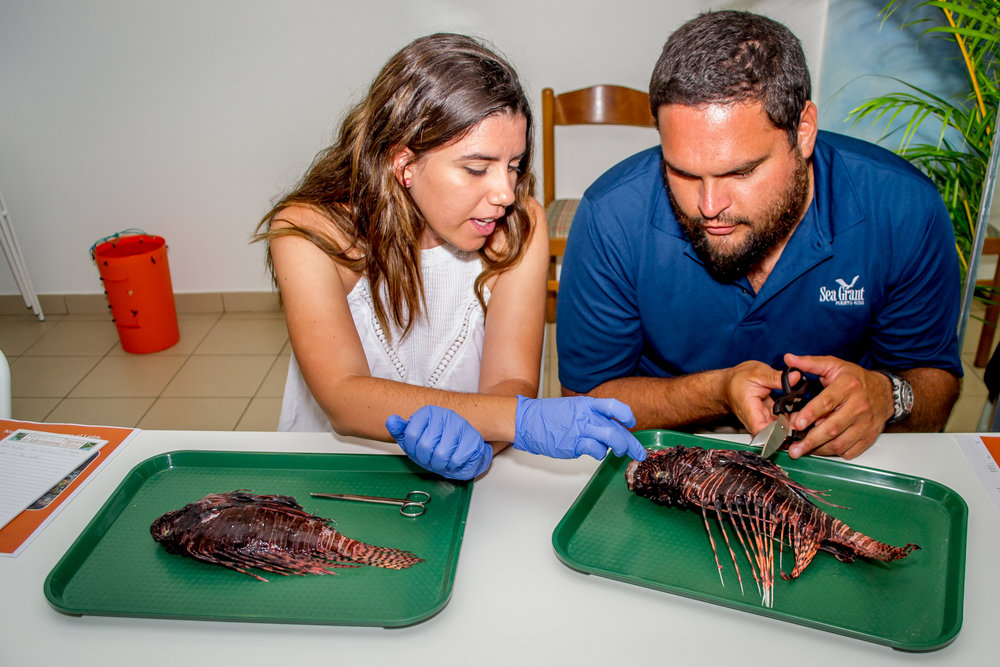 Local students investigate their lionfish specimens.