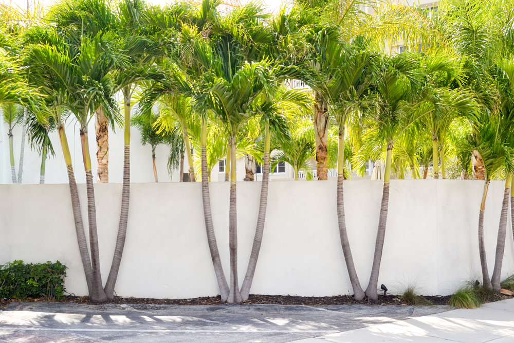 olapi-creative-branding-retreat-palmtrees-fort-lauderdale-florida